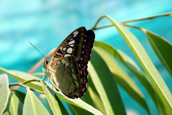 唯美好看的蝴蝶图片_WWW.171ZZ.NET