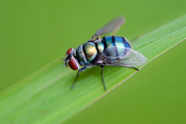 绿色苍蝇图片_WWW.171ZZ.NET