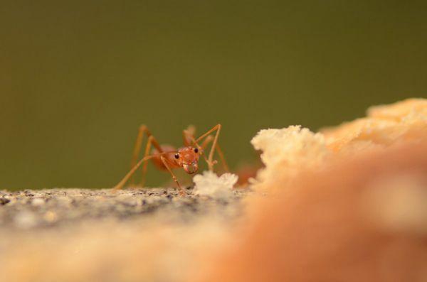 小巧的蚂蚁图片_WWW.171ZZ.NET