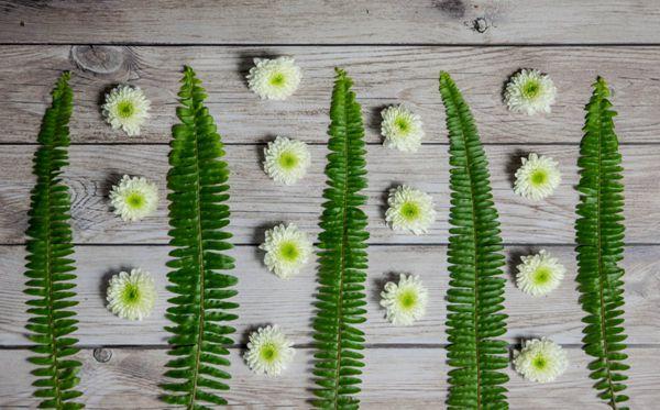 木板上的绿蕨叶图片_WWW.171ZZ.NET