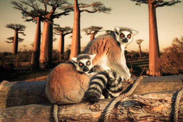 两只狐猴猫鼬图片_WWW.171ZZ.NET