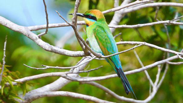 树枝上彩色鹦鹉图片_WWW.171ZZ.NET