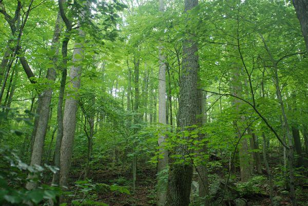 大自然绿色树林风景图片_WWW.171ZZ.NET