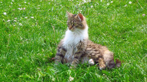 纯种小猫图片_WWW.171ZZ.NET