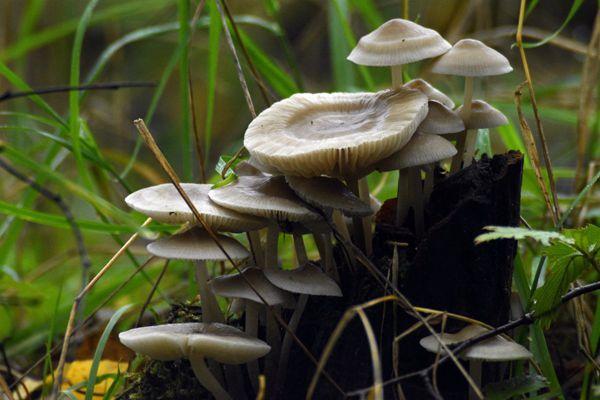 白色蘑菇群图片_WWW.171ZZ.NET
