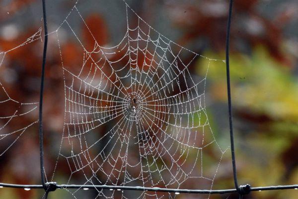 蜘蛛网雨后蜘蛛网图片_WWW.171ZZ.NET