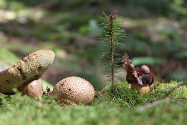 野生草地蘑菇图片_WWW.171ZZ.NET