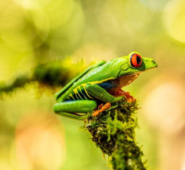 可爱绿纹树蛙图片_WWW.171ZZ.NET